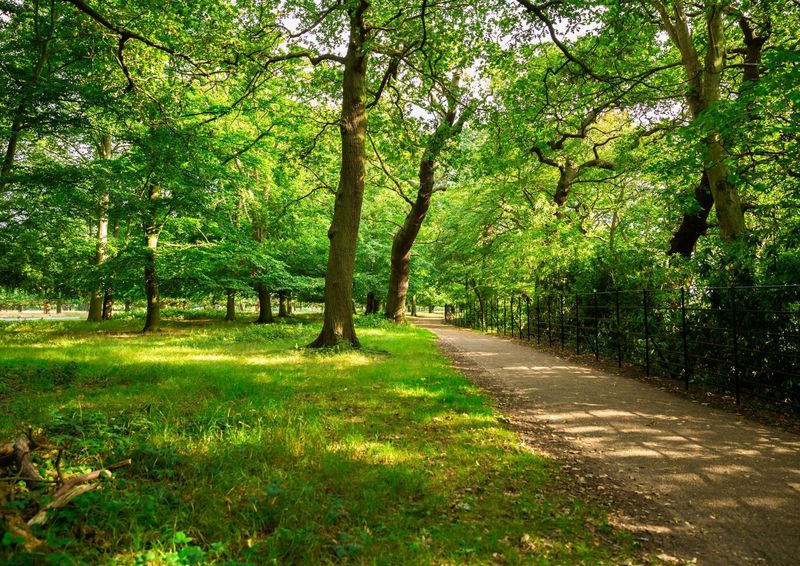A path through green woodland